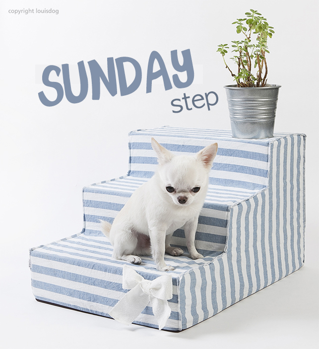 sunday-step-main.jpg