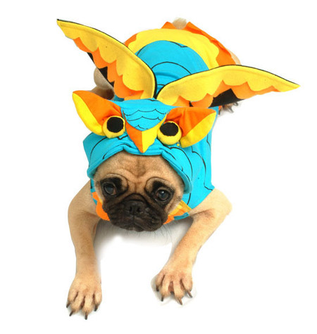Owl Dog Costume