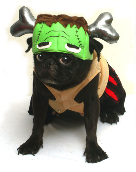 Barkenstein Dog Costume