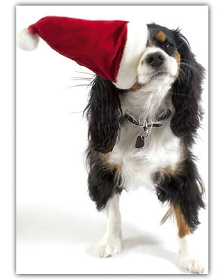 King Charles Cavalier Holiday Card Set