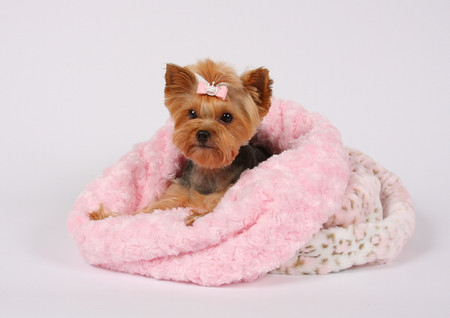 Cuddle Cup Dog Bed