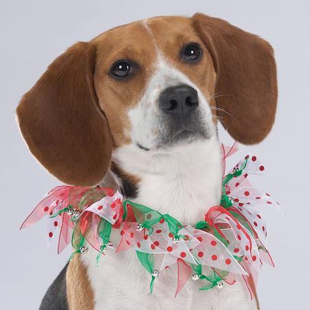 Merry Dots Dog Neck Scrunchies