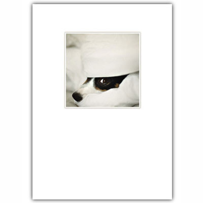 Jack Russell Visit Soon Card