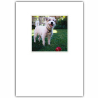 Scruffy Dog Birthday Card