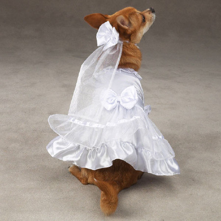Dog Wedding Dress & Veil