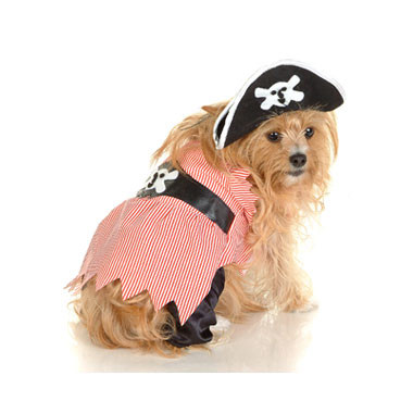 Pirate Puppies stock image. Image of adorable, holiday - 48713327