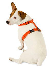 Planet Dog Cozy Hemp Harness