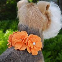Susan Lanci Tinkie's Garden Dog Collars