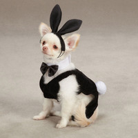 Party Hounds Bunny Dog Costume