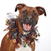 Halloween Sparkle Dog Scrunchy