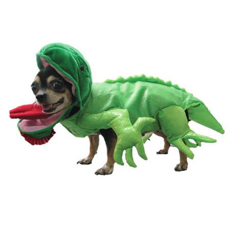 Iguana Dog Costume