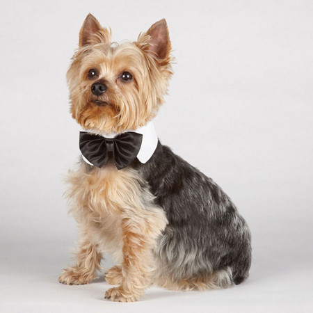 Canine Royale Black Bowties