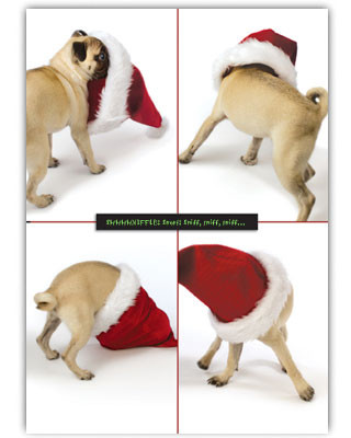 Pugs Holiday Card