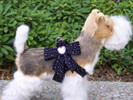 Stardust Tail Bow Heart Step-In Harness