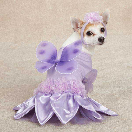 Sugar Plum Fairy Dog Costume