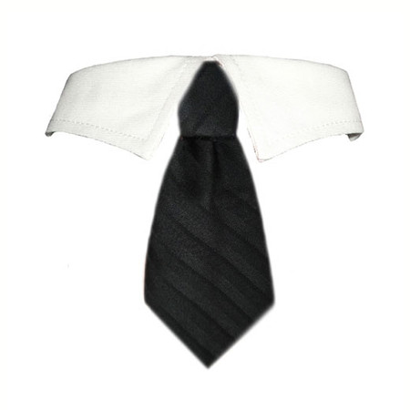 David Shirt Tie Collar