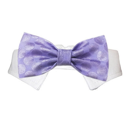 Dylan Bow Tie Dog Collar
