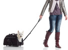 Dog Bag Rolling Jet Set Carrier