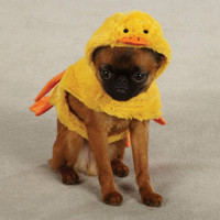 Quackers Duck Dog Costume (LAST ONE!)