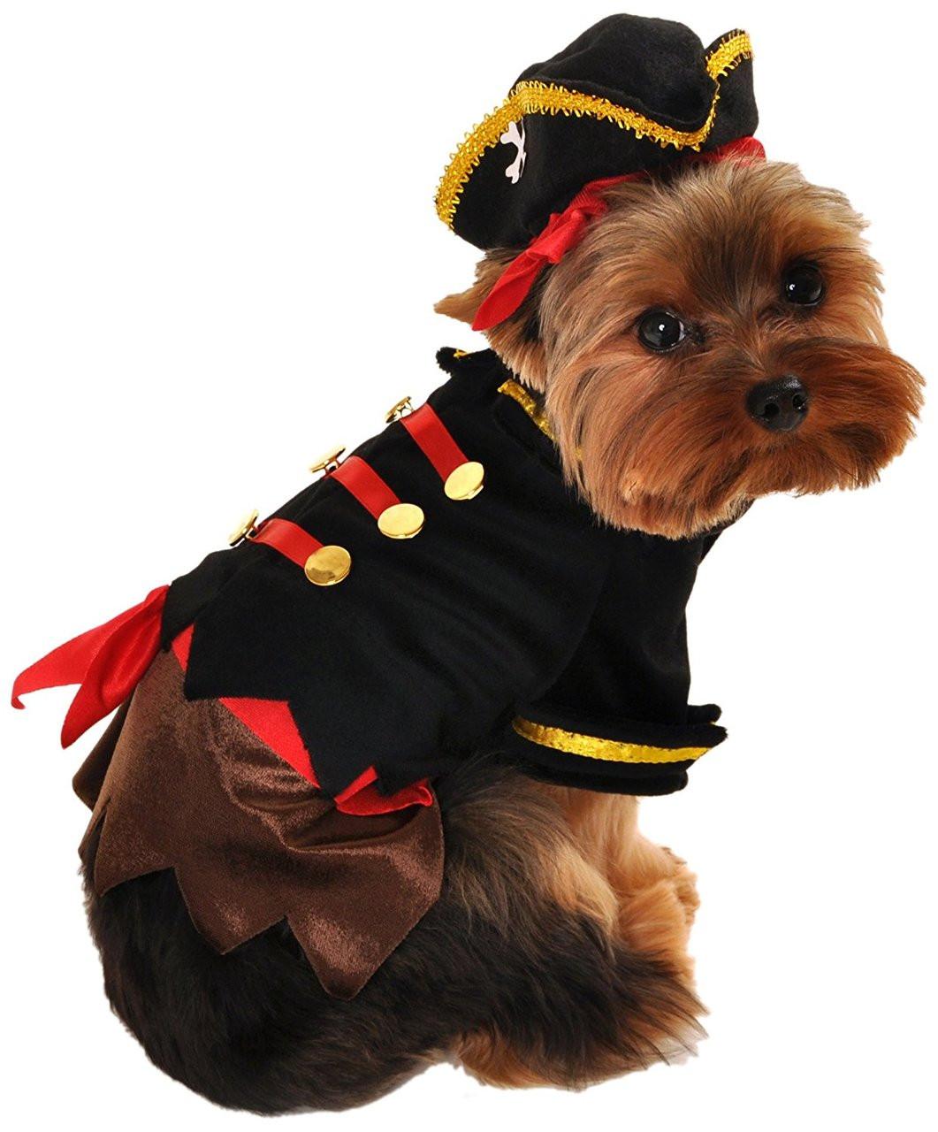 Buccaneer Pirate Dog Costume (LAST ONE!)  sc 1 st  FunnyFur & Pet Costumes u2013 Pet Costume Ideas For All Dogs | FunnyFur.com