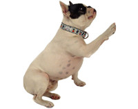 Pup Du Soleil Collar & Lead