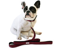 Vertical Stripe Collar & Lead