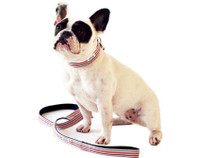 Wee Ones Stripe Collar & Lead