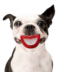 Paci-Chew Smile Dog Chew Toy