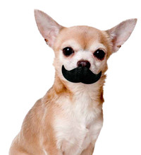 Paci-Chew Mustache Dog Chew Toy