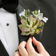 Mossy Succulent Boutonniere