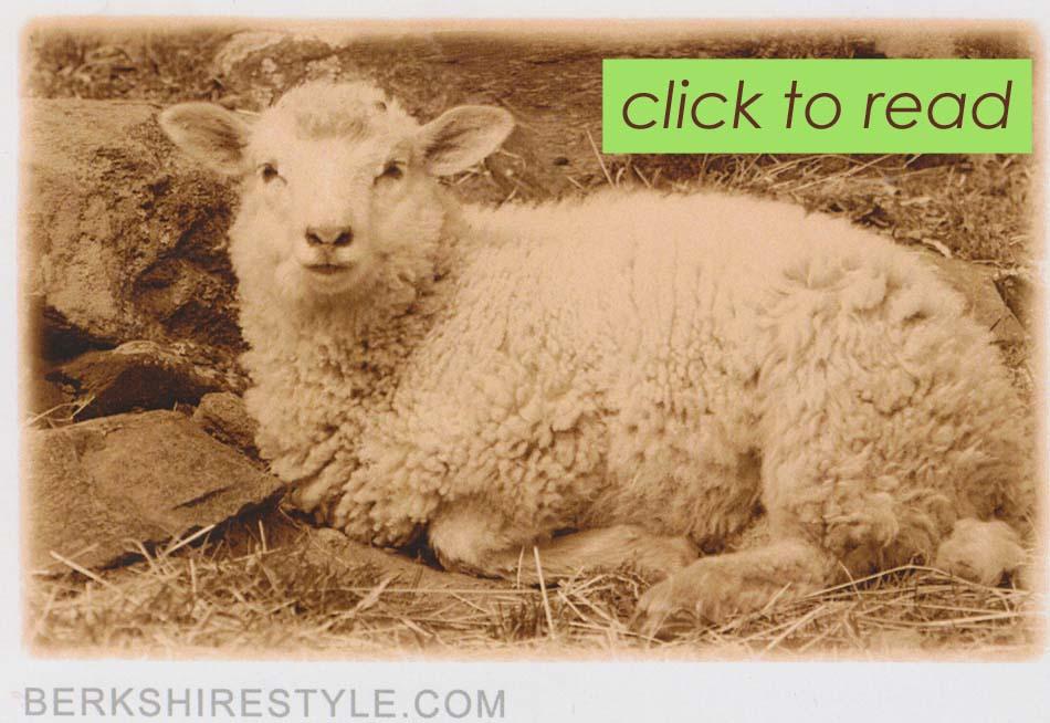berkshire-style-sheep-click-to-read-copy.jpg