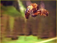 RE-CALIBRATING THE BEE-ATTITUDES (Part four)