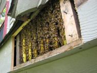   RE-CALIBRATING THE BEE-ATTITUDES… (Part One)