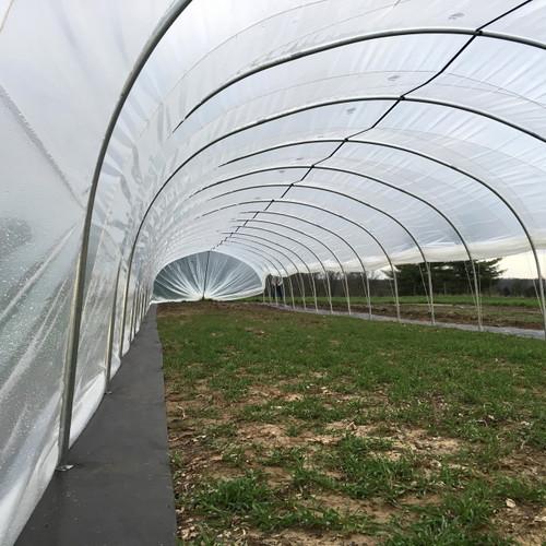 16 ft. x 100 ft. Caterpillar Tunnel
