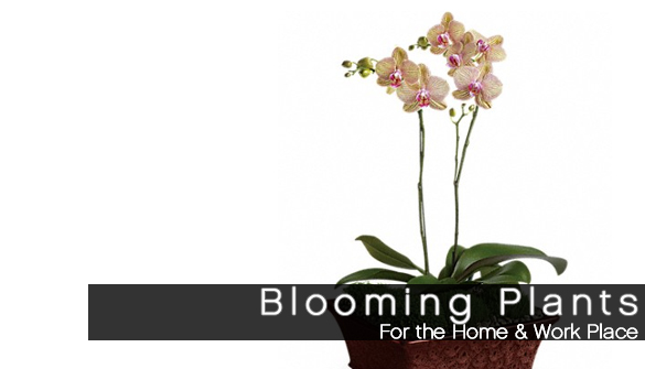 Plants for the home or office