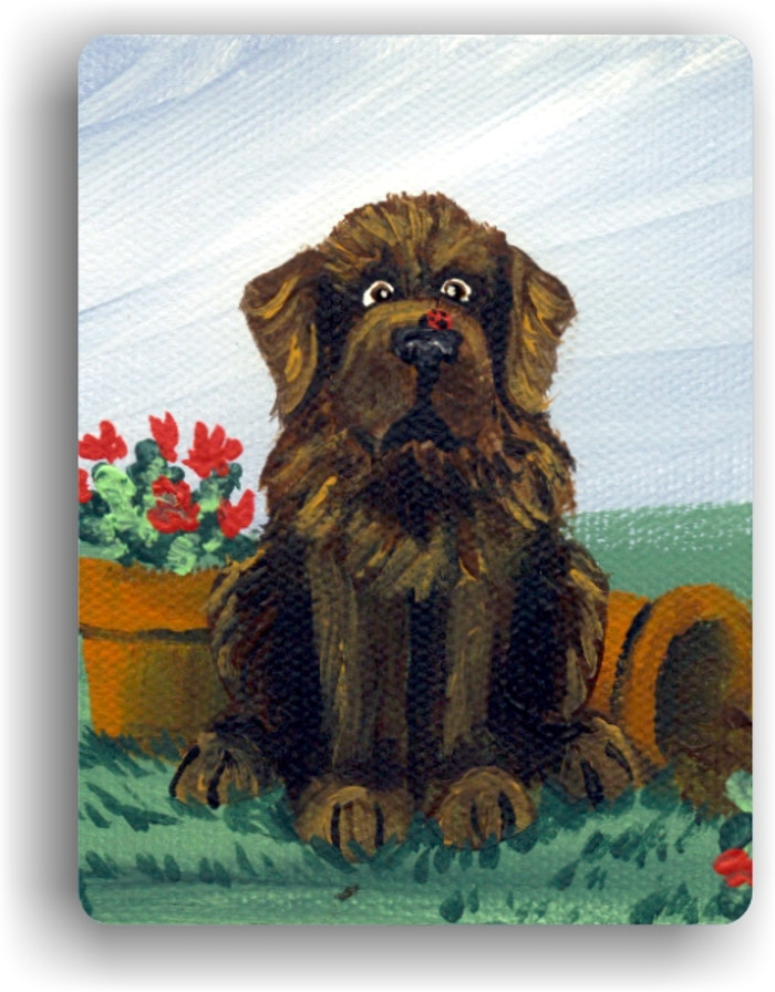 MAGNET · A LITTLE VISITOR  · BROWN  NEWFOUNDLAND · AMY BOLIN