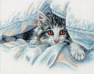 Dimensions - Cat Comfort