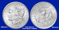 1884-CC Morgan Silver Dollar - Collector's Circulated Condition