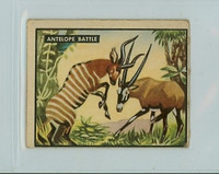 1950 Bring Em Back 23 Antelope Battle Good to Very Good