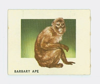 1951 Animals of the World 116 Barbary Ape Excellent Grey Back
