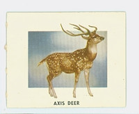 1951 Animals of the World 133 Axis Deer Excellent Grey Back
