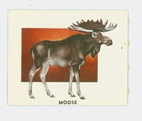 1951 Animals of the World 161 Moose Excellent Grey Back