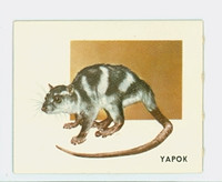 1951 Animals of the World 179 Yapok Excellent Grey Back