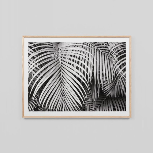 Framed Print: Black And White Palms