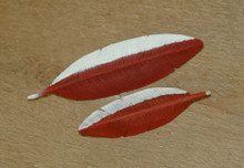 Harlequin Feather Pin