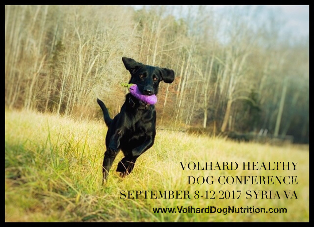 Healthy Dog Conference 2017, Syria Virginia with special guests Sheila Hamilton Andrews, Jana Froeling, Monique Maniet, and Lise O'Neill