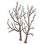 Twin Trunk Tree