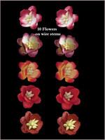 42293 Blossom Red SET