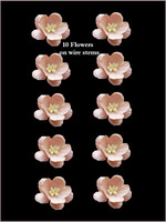 42225 Blossoms Peach