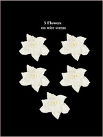 62010  Lillies White